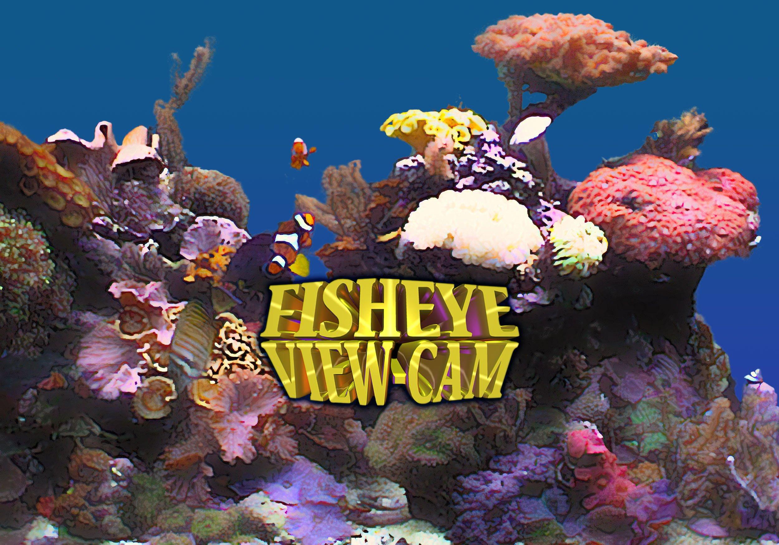 Fisheye View